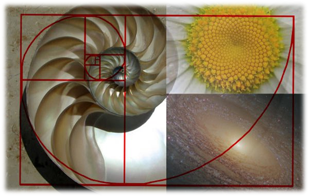 Golden ratio is as such a concept derived from the nature where proportions make it symmetrical even in its natural form. & Golden Section and its application in Architecture and Design ...